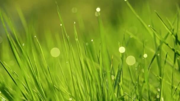 Spring vibrant green grass close-up