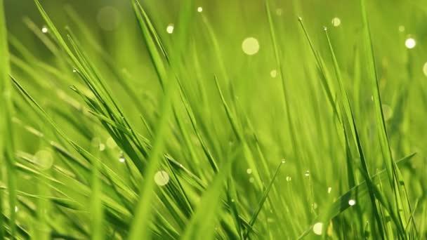 Jarní pulzující zelená tráva zblízka