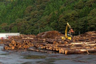 Pine timber stacked at lumber yard