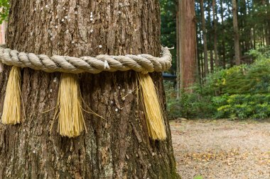 Rope on tree bark in Japanese temple