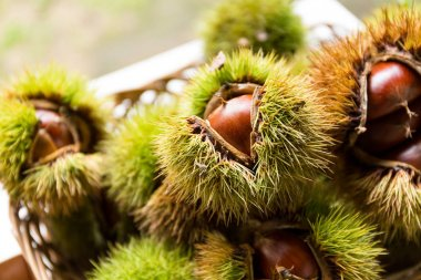 Autumn chestnuts in wooden basket