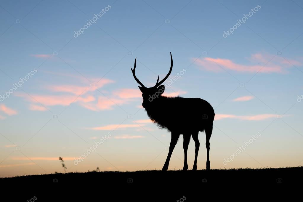 Silhouette of deer with sunset