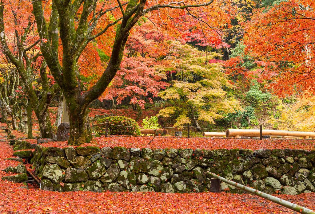 Japanese temple with maple trees