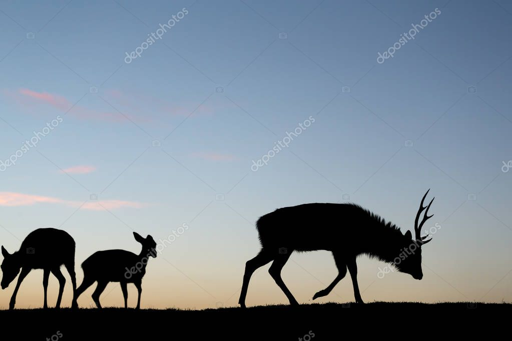 Silhouette of deer at evening