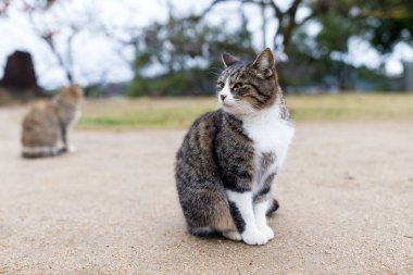 Lovely cat outdoor