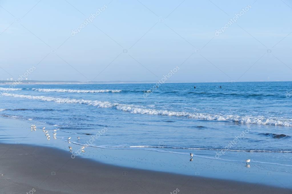 Beach coast with seagulls