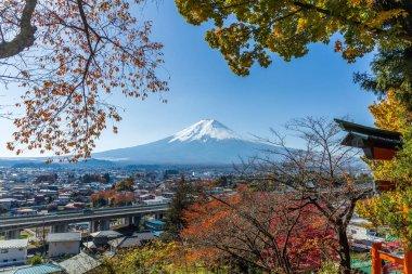 Mountain Fuji and maple trees