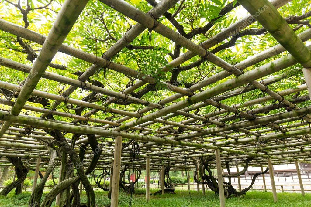 Vine shed in the garden