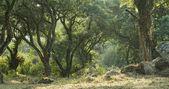 Fényképek Trópusi zöld erdő és a napfény