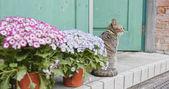 Fotografie Street cat sitting at outdoor