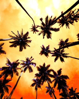 Palm Trees with orange sky