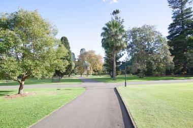 Trees at botanical garden
