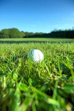 Golf ball on wet grass