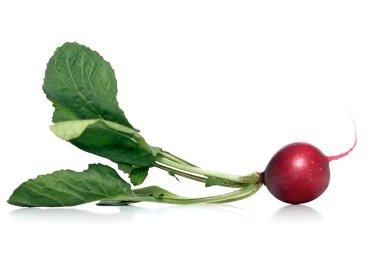 Fresh ripe radish