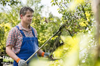Gardener trimming tree branches