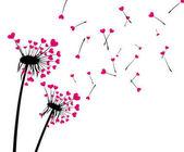 Fotografie Valentinstag Hintergrund mit Liebe Löwenzahn