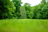 Krásný výhled na pokosené trávníku v pozadí park se stromy