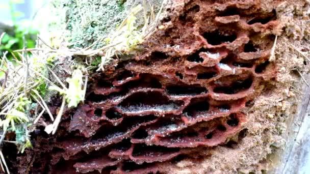 black ants on wood.