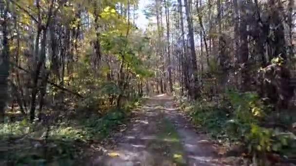 Jízda autem po úzké lesní cestě