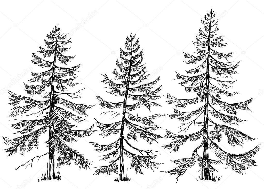Pine trees vector collection. Hand drawn Christmas trees
