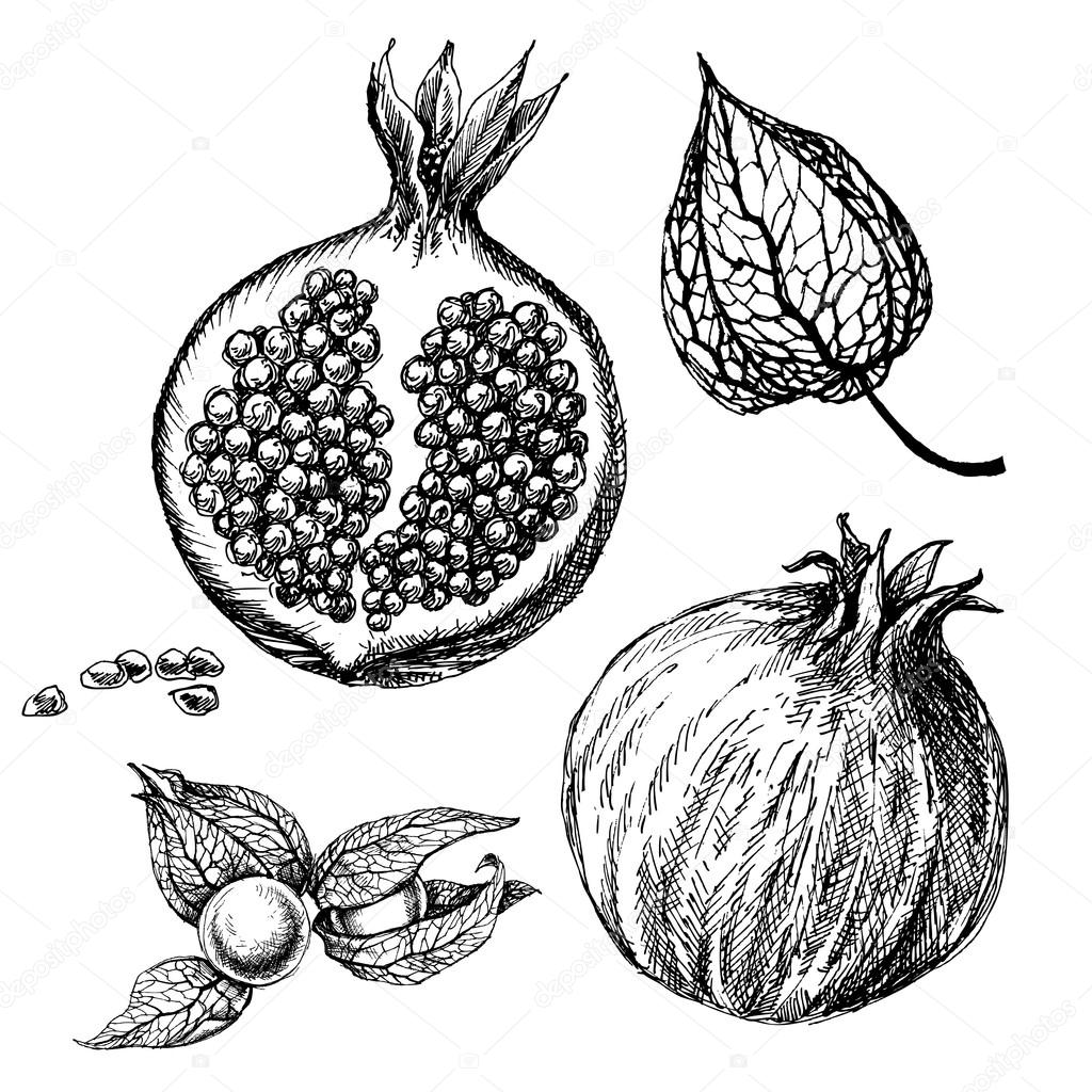 Ensemble de grenade dessins de main isol s fruit de physalis automne image vectorielle - Grenade fruit dessin ...