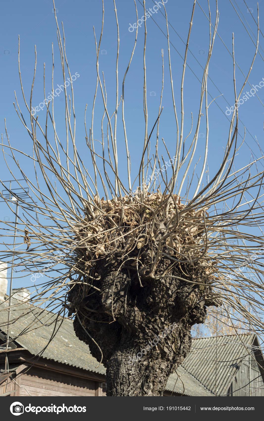 spooky tree sprouts stock photo yurizap 191015442