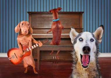 a trio of dogs singing