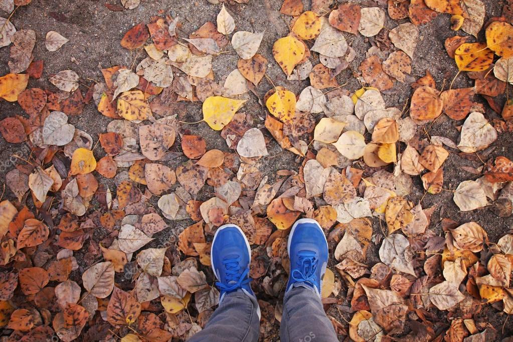 blue shoes in leaves during fall