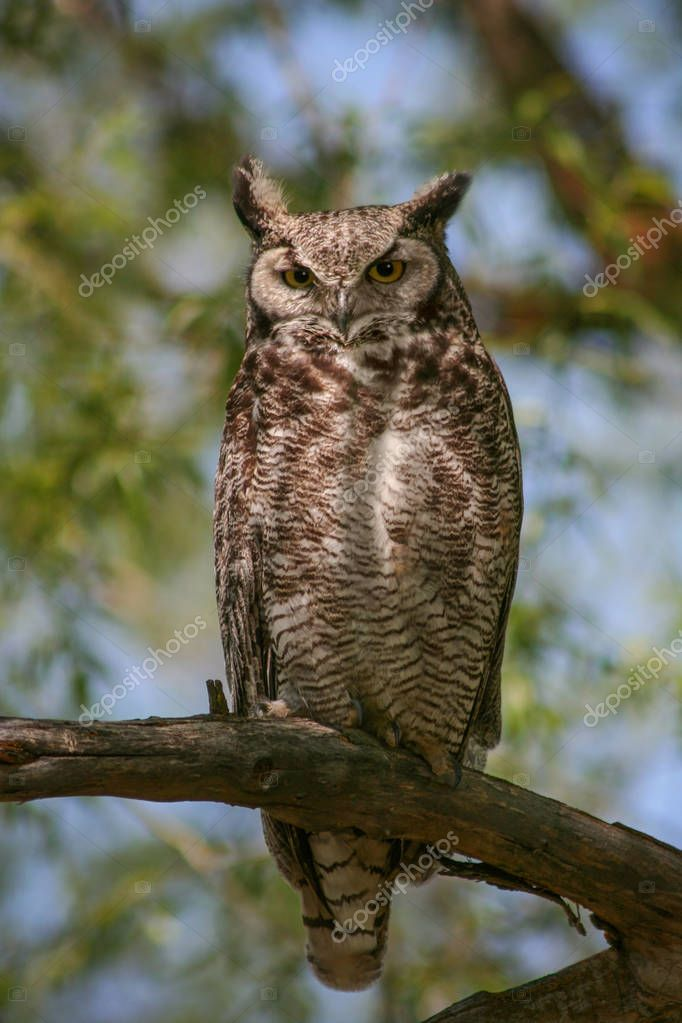 a great horned owl sitting in a tree