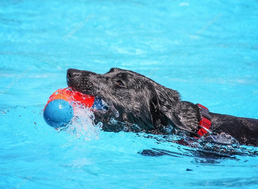 Dog having fun at  pool