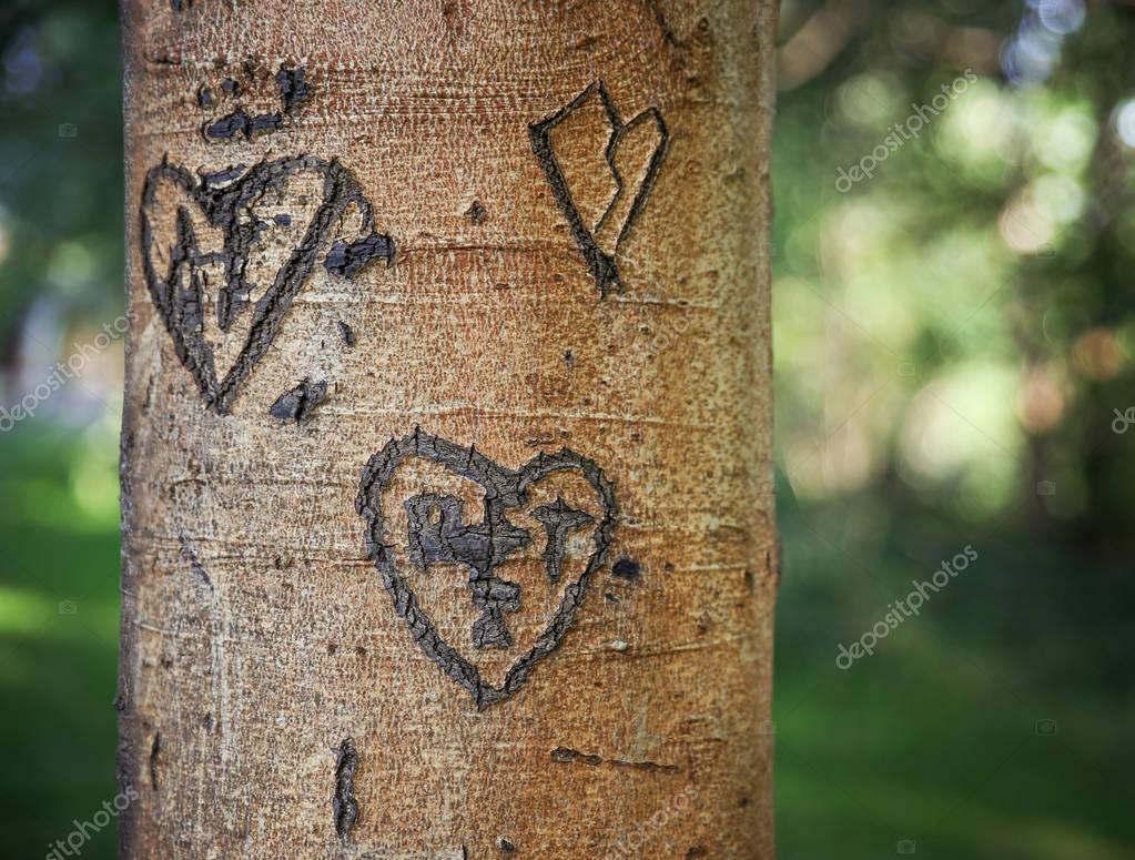 some carvings of hearts on a tree