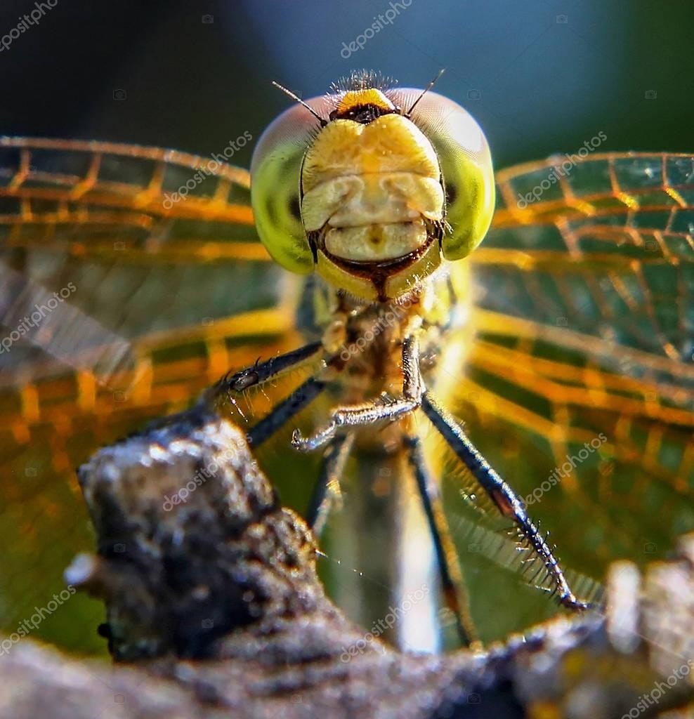 beautiful and colorful dragonfly in a natural setting environmen