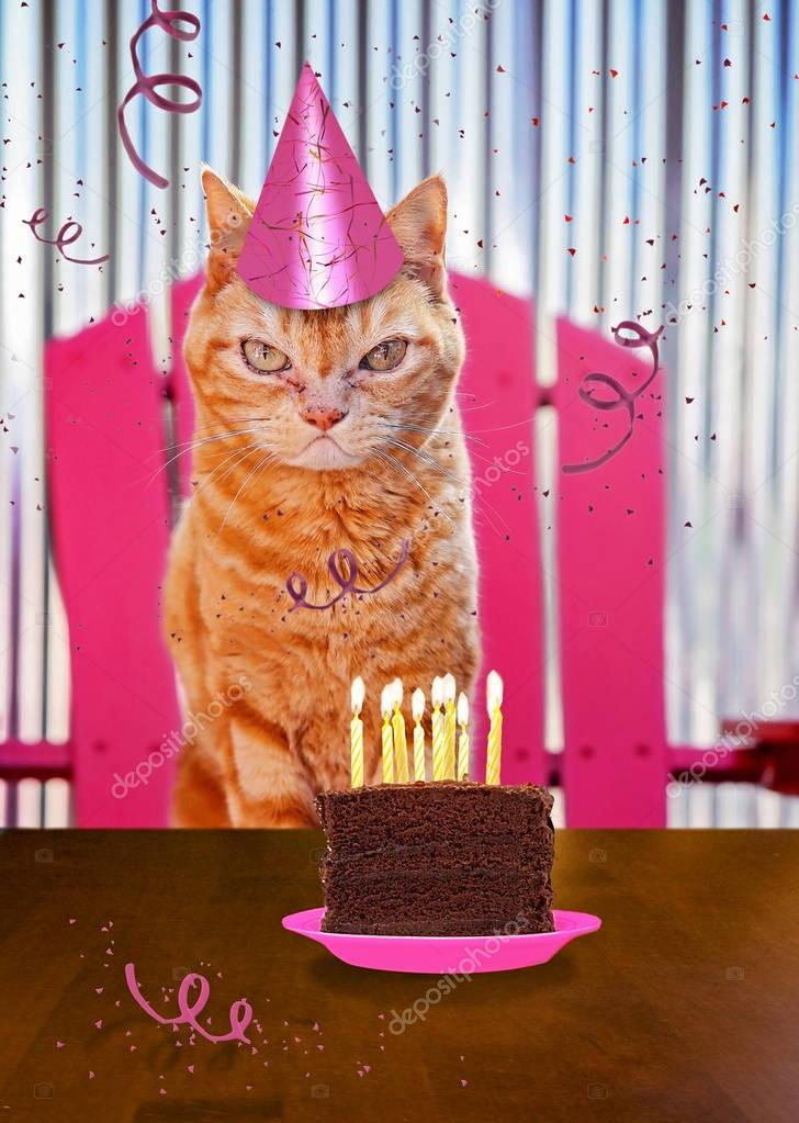 a orange cat with a piece of cake on a plate with candles and st