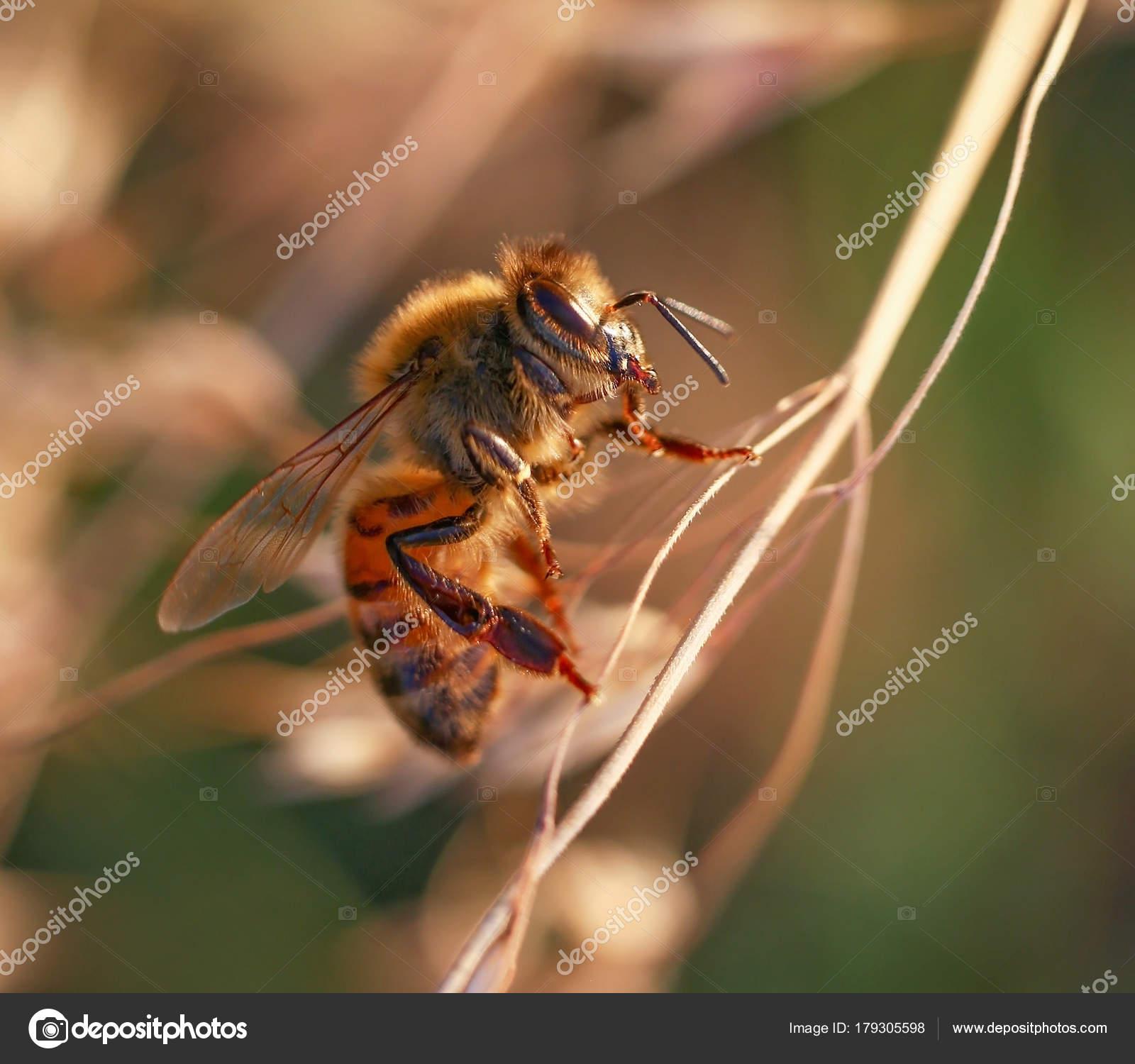 Suche Schöne Bilder schöne und bunte biene einer natürlichen umgebung auf der suche