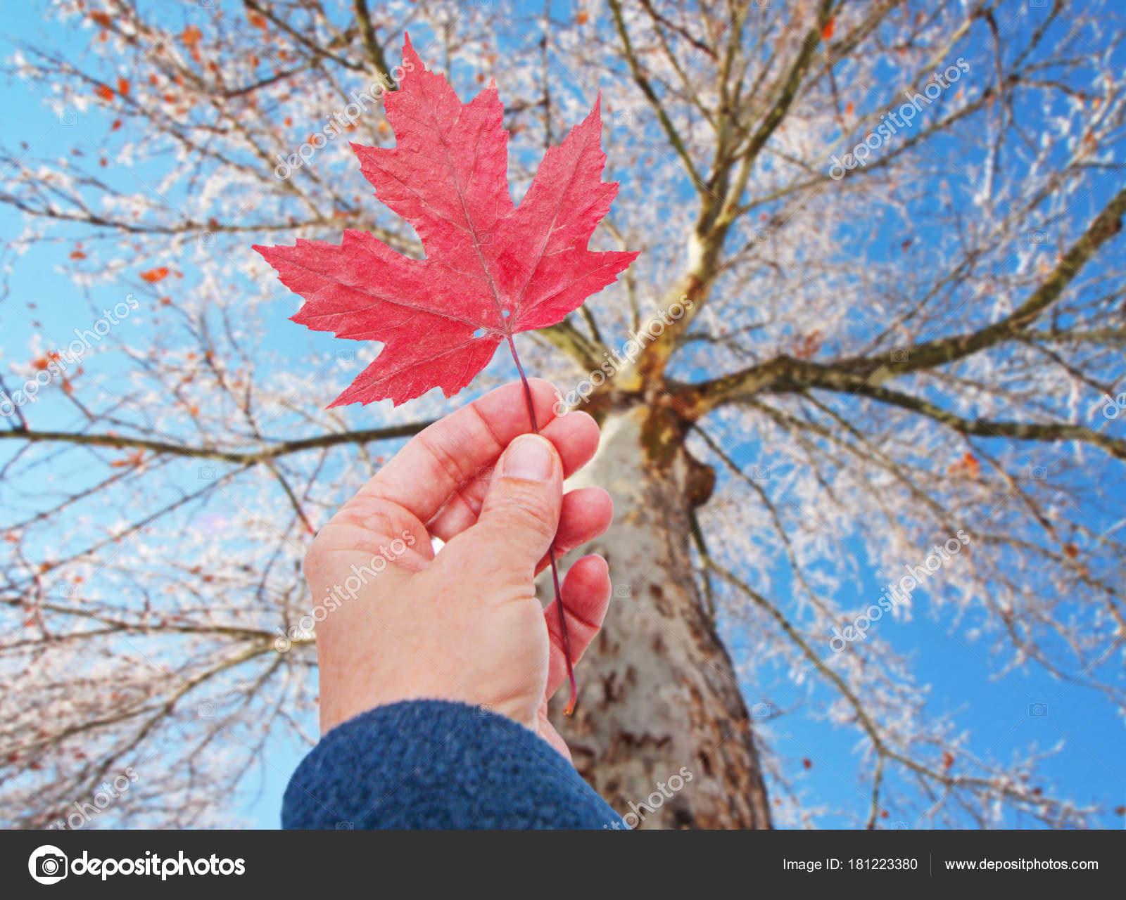 main tenant une feuille rouge jusqu'à un arbre à l'automne, ce qui