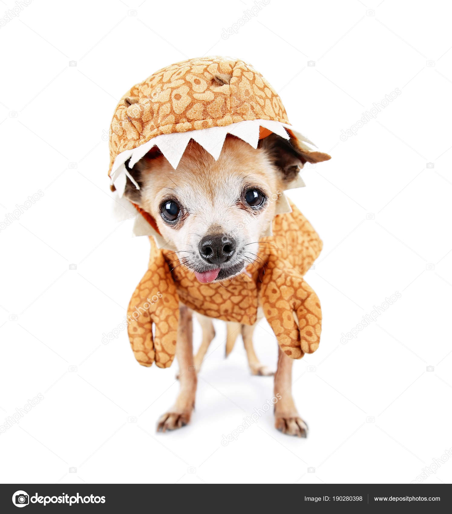 Cute chihuahua dressed in a dinosaur costume isolated on a white background u2014 Photo by graphicphoto  sc 1 st  Depositphotos & cute chihuahua dressed in a dinosaur costume isolated on a white ...