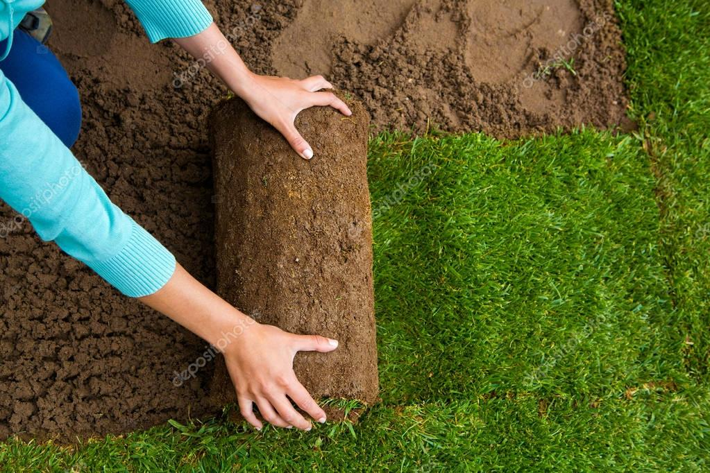 Woman applying turf rolls
