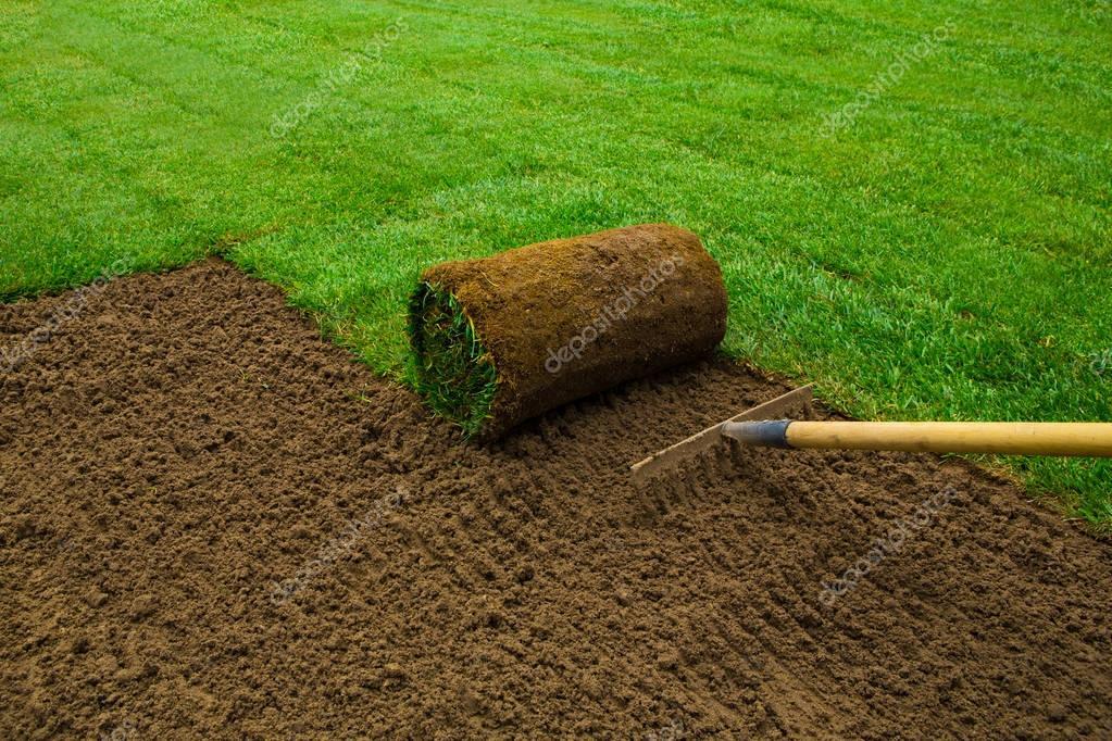 Gardener applying turf rolls