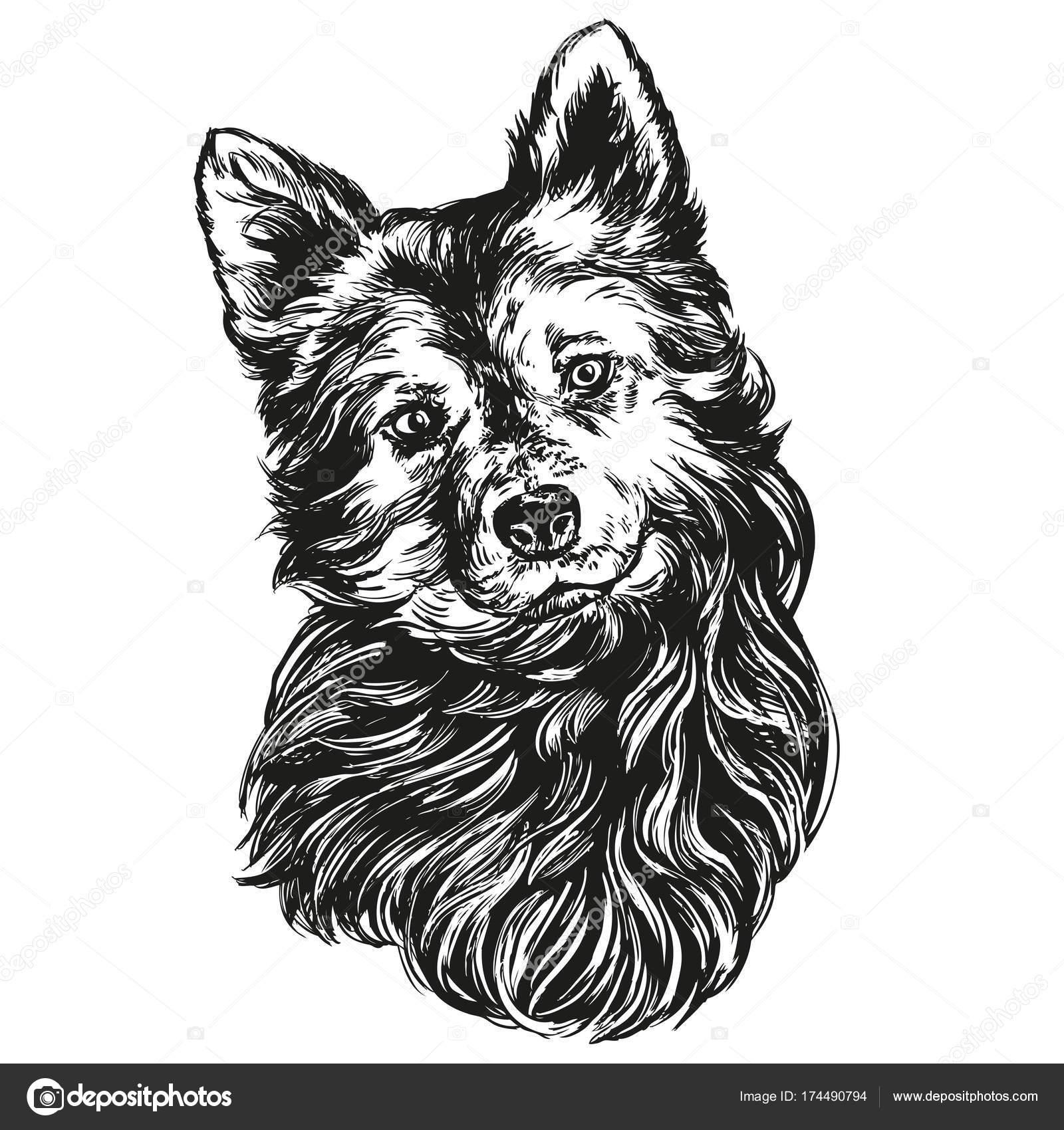 Раскраска пес пэт | собака ПЭТ рисованной Векторная ...