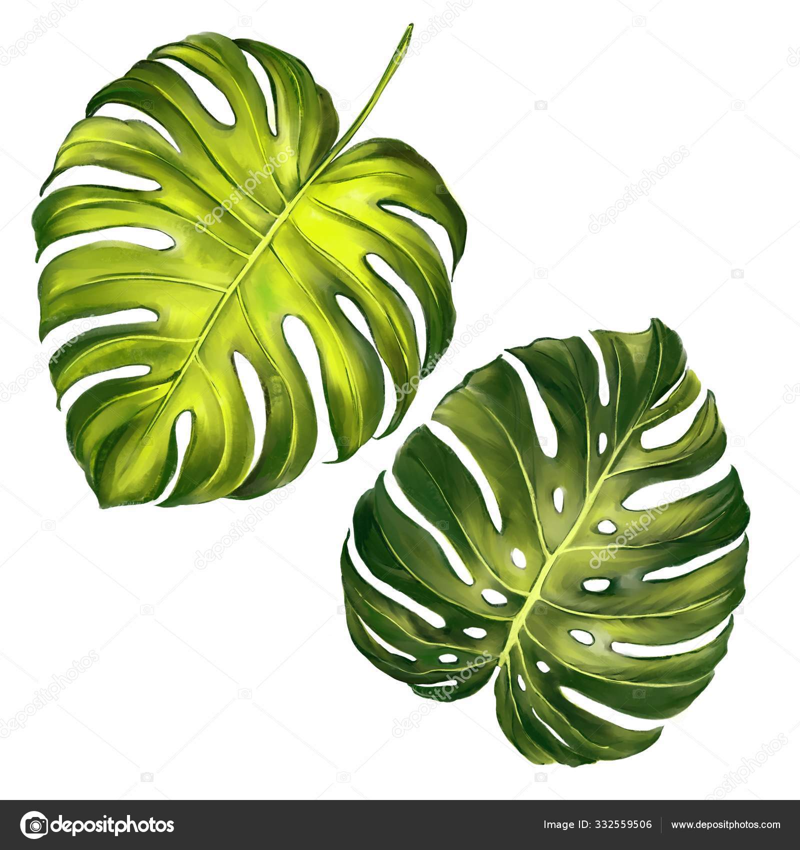 Tropical Leaves Jungle Botanical Floral Elements Palm Leaves Art Illustration Painted With Watercolors Isolated On White Background Stock Photo C Vladischern 332559506 All art prints include a 1 white border around the image to allow for future framing and matting, if desired. https depositphotos com 332559506 stock photo tropical leaves jungle botanical floral html
