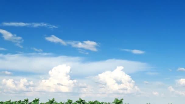 Slunečnice a mraky rychle