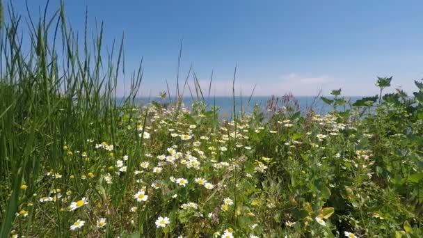 Sedmikrásky a trávy na pozadí moře a modré nebe