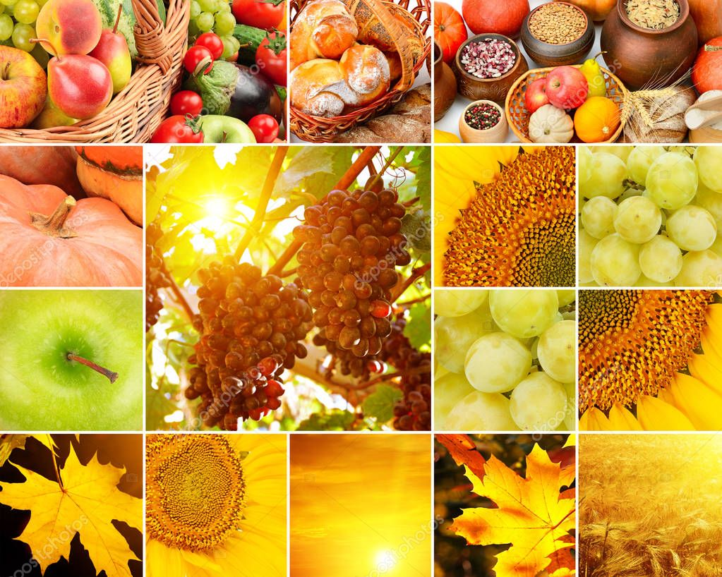 Autumn collage of fruits, vegetables, yellow leaves.