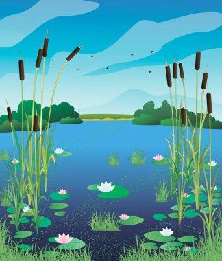 Illustration swamp lily.