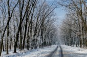 Beautiful snow-covered road. High beautiful trees in snow and fr