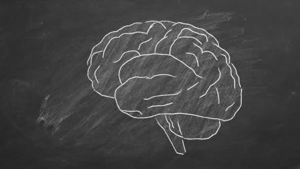 Chalk drawn human brain  on a blackboard.