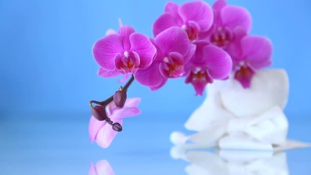orchidej Phalaenopsis Pěstování cibulovin