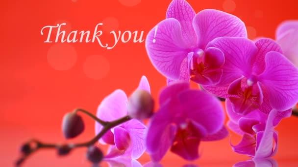 szép Phalaenopsis orchidea virágok