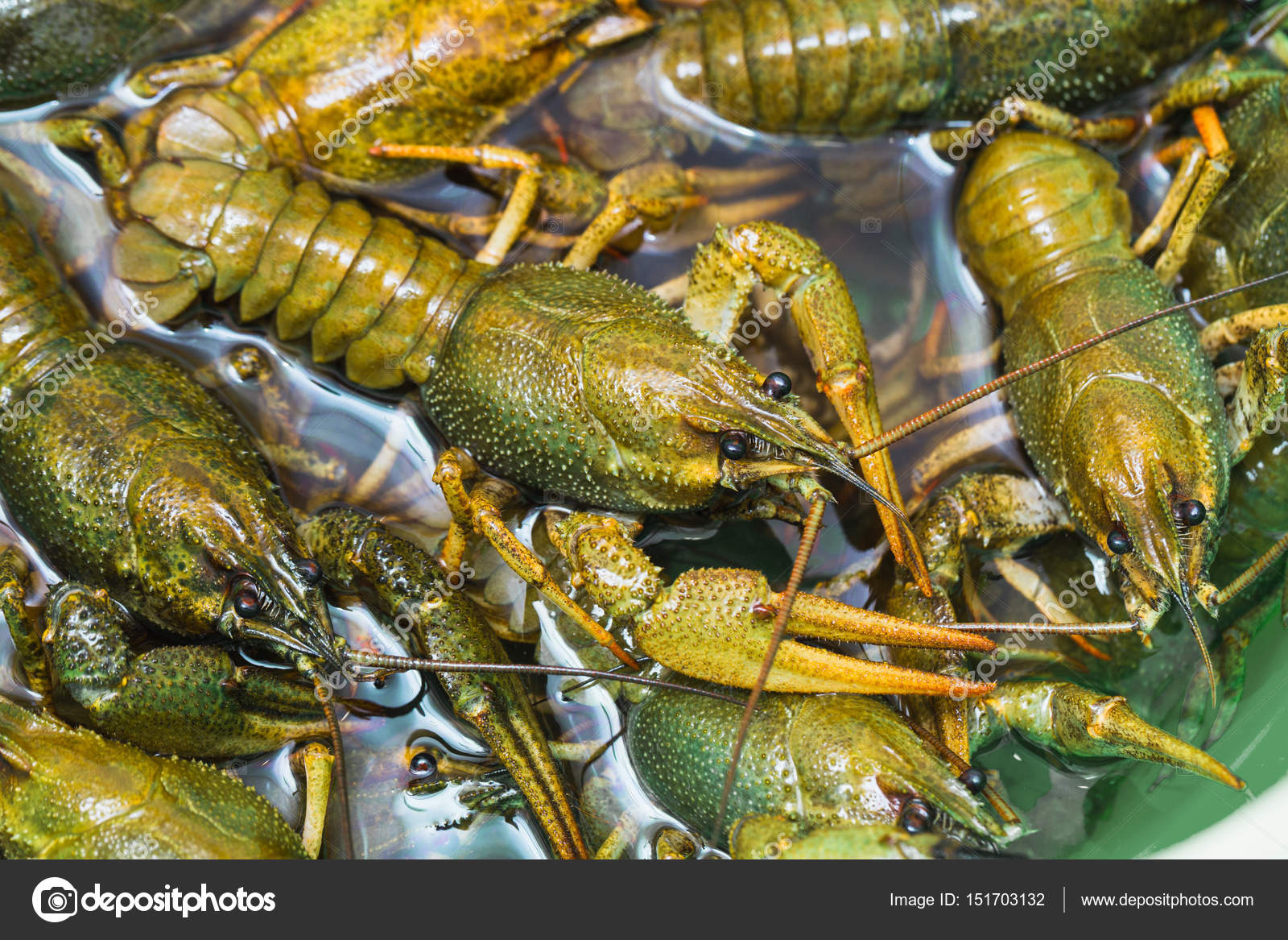 Live crawfish crawl in the water — Stock Photo © alan64