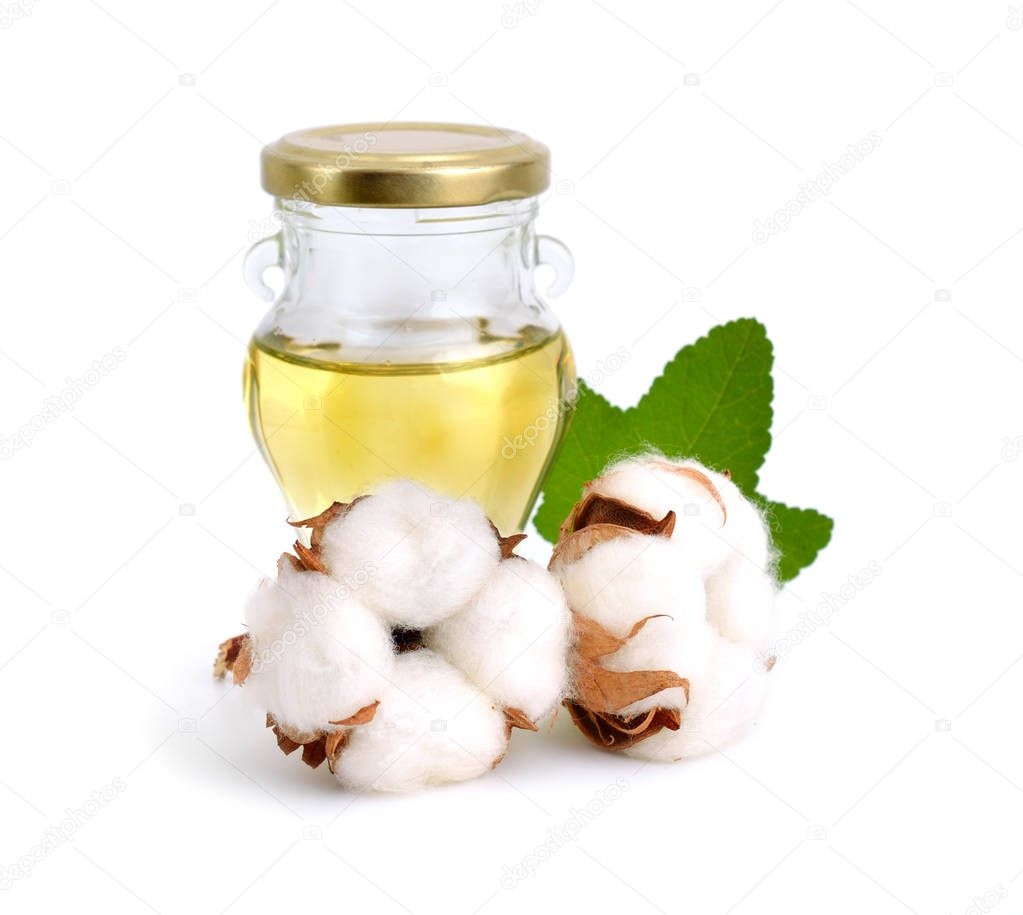 Cotton plant with oil isolated